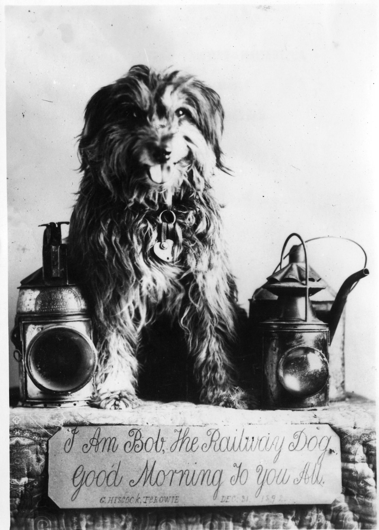 19199   Bob the Railway Dog